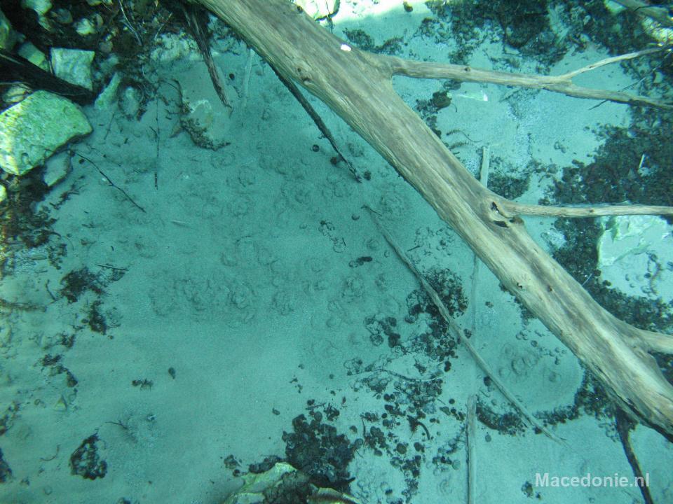 Boomstam onder water